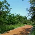 ウッドチップの散歩道