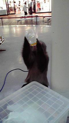 お猿さんと遭遇!