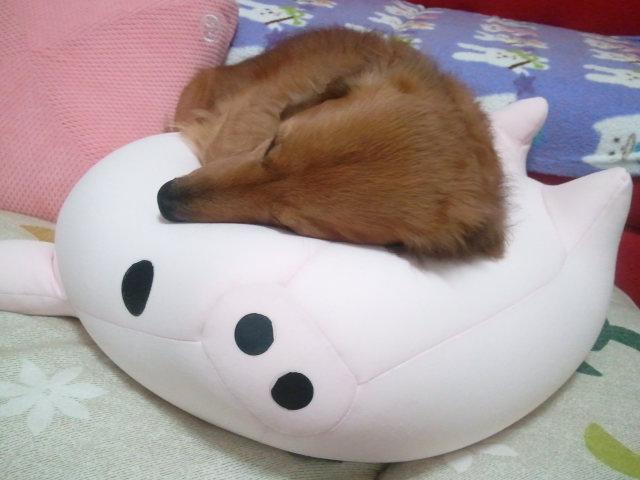 まだ起きたくない~