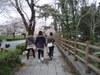 2010sakura5